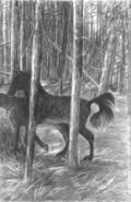 POD-Horses right-blog size