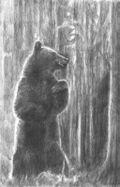 POD-The bear-blog size