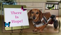 There_is_hope_photo_1
