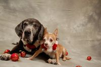 Dogs2010_015