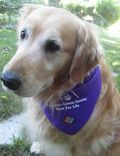 Bessie_wearing_her_BFL_bandana_and_pin
