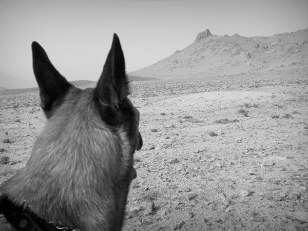 Barking Planet Children's & YA Books : Fear, War, Kids, Dogs