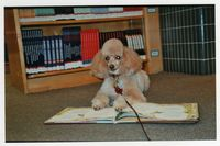Callie_in_the_library_for_the_R.E.A.D._program (1)