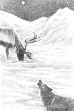 Reindeer&Dog&Night-397KB