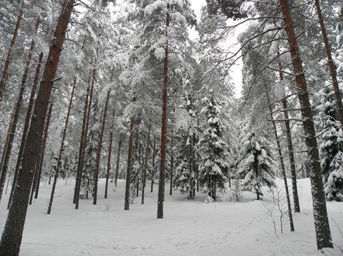 January-february2010-2-Tuusula winter