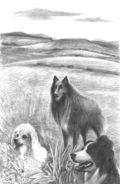 POD-the three dogs-blog size