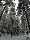 January-february2010-3-Tuusula winter