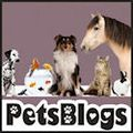 PetsBlogs-125