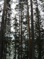 Eastern Finland-Punkaharju