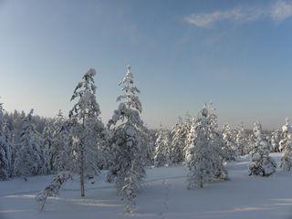SnowForest8