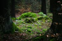 Fairy_mounds_by_erynlasgalenphotoart-d73uy5s
