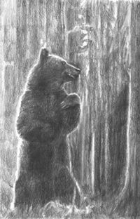 POD-The bear-blog size
