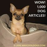 1000-DOG-ARTICLES-1-242x242