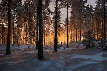 Finland-forest-MikkoLagerstedt