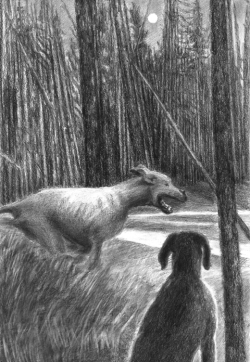 CITM-Dogs at night-blog size