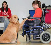 Mobility-Assistance-Dog5