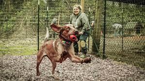 FFF Freed dog happy