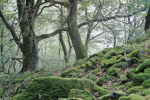Primeval Beech Forests of Germany.jpg2