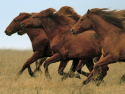 Horses wild Russian steppes
