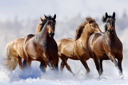 Horses-orig