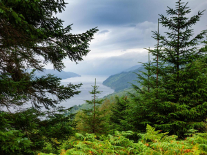 Ancient Caledonian pine forest scotland